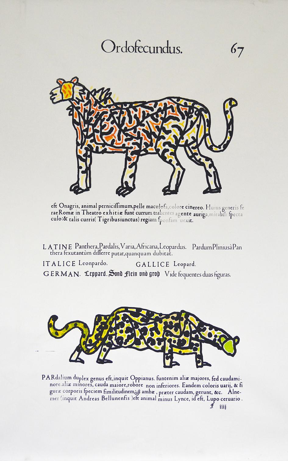 Adrien Vermont (Tiger & Leopard)